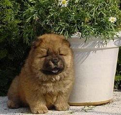 foto-perro-4