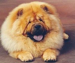 foto-perro-3
