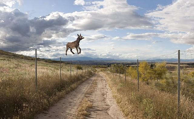 burro volando
