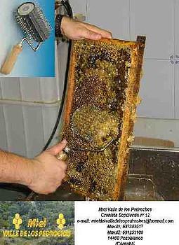 rodillo de puas de inoxidable para desopercular mieles densas tales como la de brezo