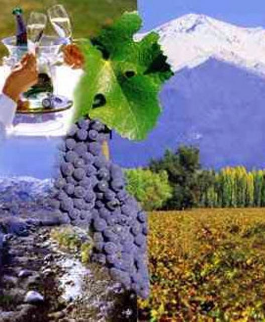 Vinos de Mendoza - Argentina