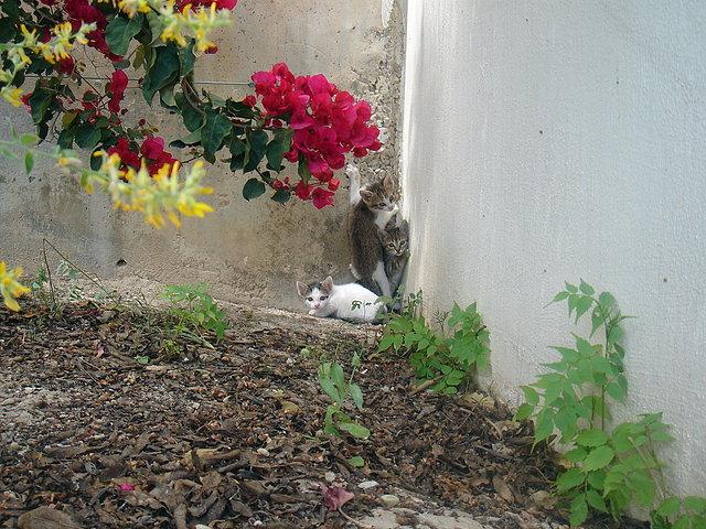 gatitos en jardín casa