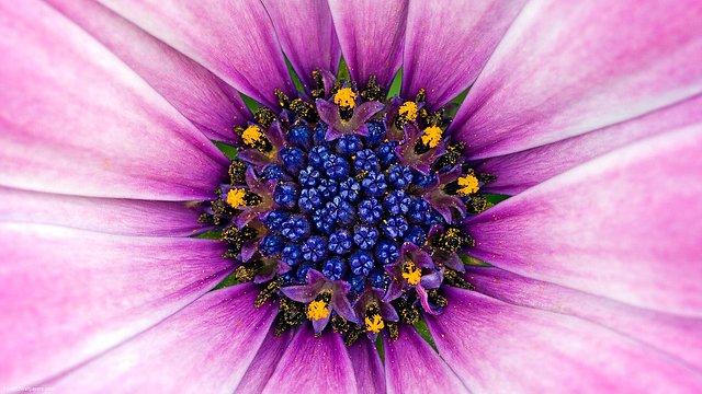 Just-A-Flower-1