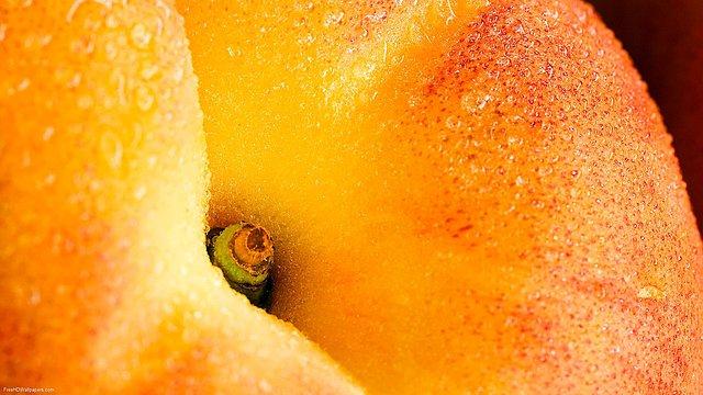 Fruit-Top-1