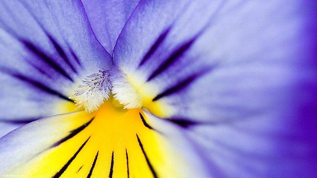 Flower-Burst-1