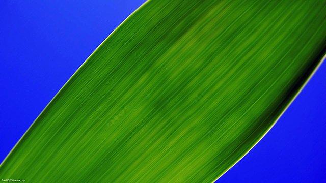 Greeny-1