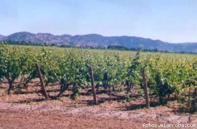 El Valle de Colchagua y el Secano Costero se llena de viñedos.
