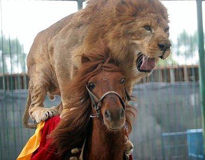 Foto tomada de internet. León montando a caballo.