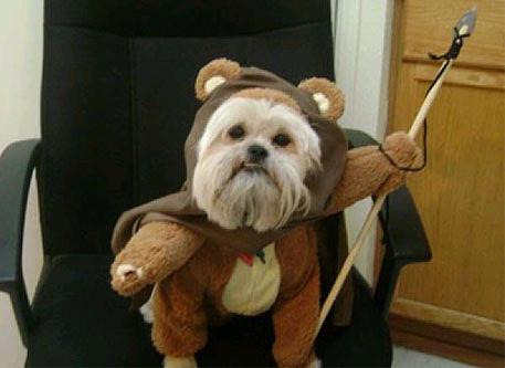 star-wars-dog