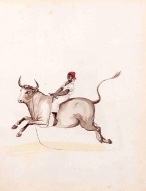 Prueba de toro montado