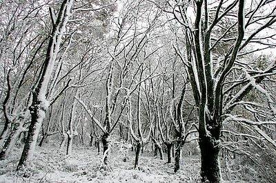 Percepción del frío en la nieve