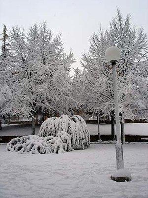 Nevada antológica