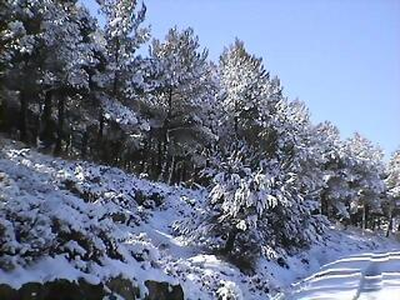 Nieve a punta pala