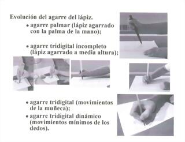 Evolución agarre del lápiz