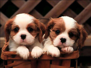 cute-puppies-puppies-and-more-31104113-1024-768