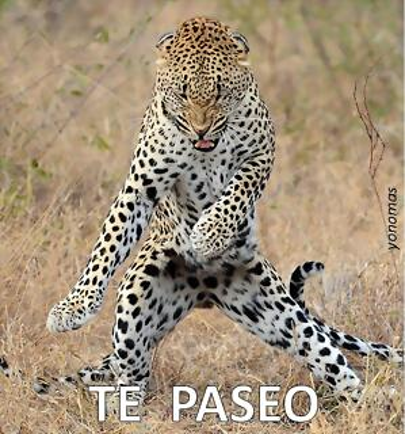 tepaseo-leopardo
