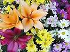ozono21 flores